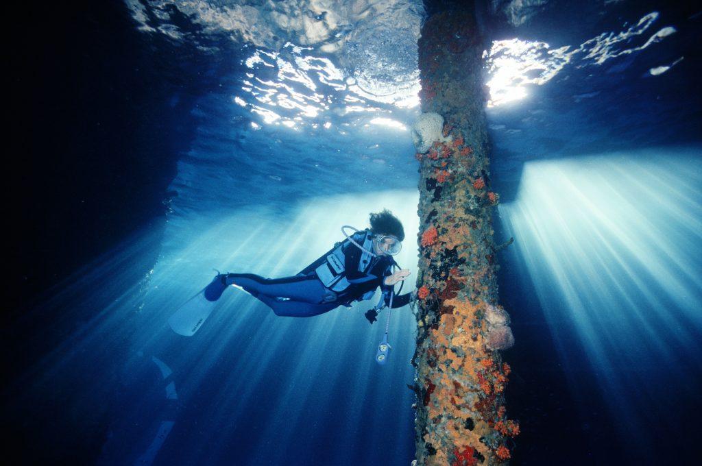 Rolex y la conservación: una carrera contra el tiempo