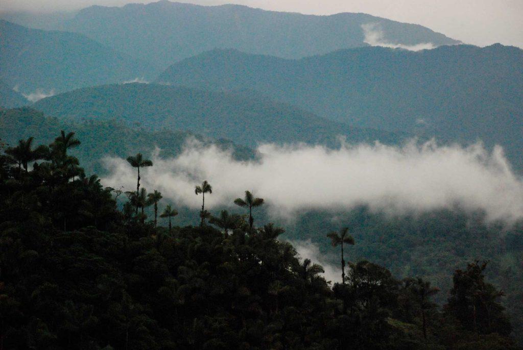 Amazonia, la esperanza aún existe